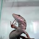Troodos Mountain Lizard