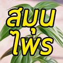 สมุนไพรไทย Thai Herbs icon