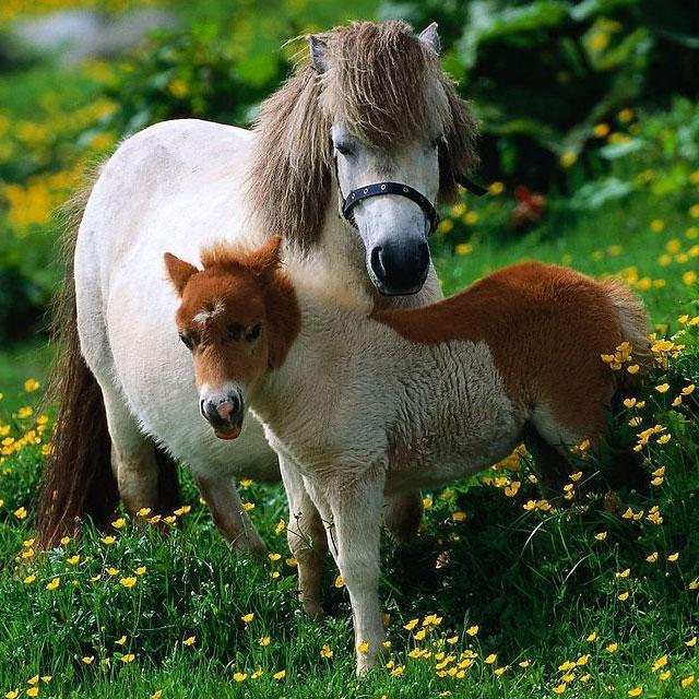 Horses Jigsaw Puzzles - screenshot