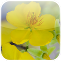 Mai Flower Live wallpaper logo