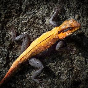 Orange and Black by Sarthak Bisaria - Animals Reptiles ( orange, reptile, black,  )