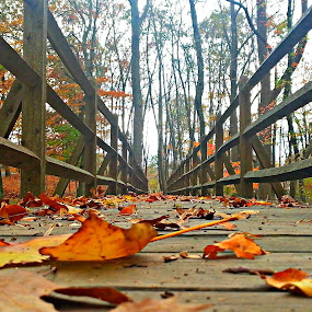 New England's Fall Foliage by Heather Succianna - Nature Up Close Leaves & Grasses ( fall leaves on ground, fall leaves )