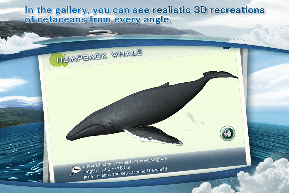 REAL WHALES Find the cetacean.- screenshot