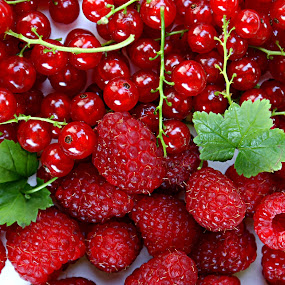 Currants and raspberries by Alka Smile - Food & Drink Fruits & Vegetables (  )