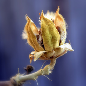 Winter Bud by Fran Juhasz-Mckitrick - Nature Up Close Other plants