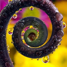 Spring Delight by Lynne McClure - Nature Up Close Natural Waterdrops ( fern, natural light, water drops, nature, macro photography, circle, flowers,  )