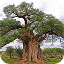 eTrees of Southern Africa APK