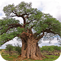 eTrees of Southern Africa icon