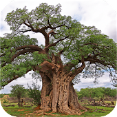 eTrees of Southern Africa