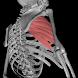 3D解剖学