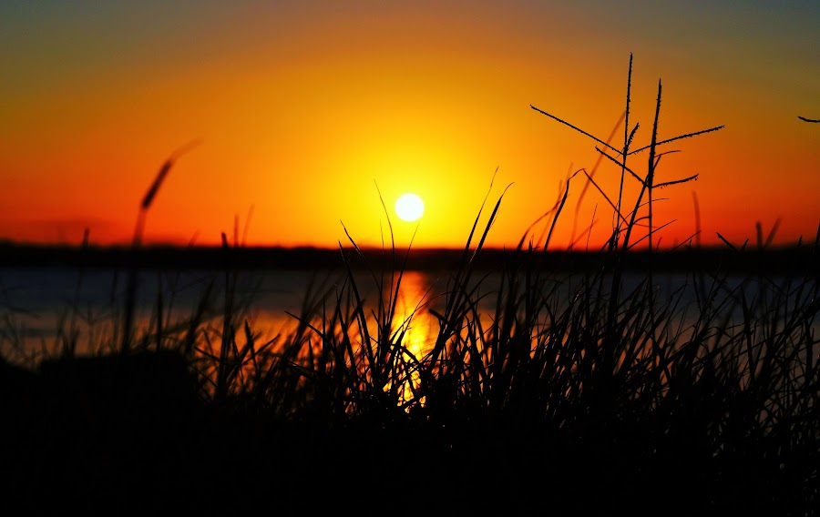 Sunset by Moira Hatchett - Nature Up Close Leaves & Grasses