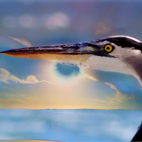 Heron Eye by Scott Walker - Digital Art Animals ( sea bird, clouds, dreams, color, fusion, ocean, sunrise, birds )