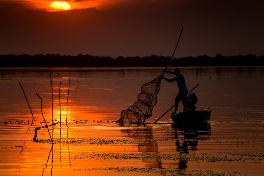 The Fisherman by Radu Dumitrescu - Landscapes Waterscapes ( water, sunset, fish, delta, fishing net, romania, fisherman, danube )