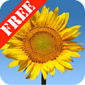 Sunflowers Free Live Wallaper logo