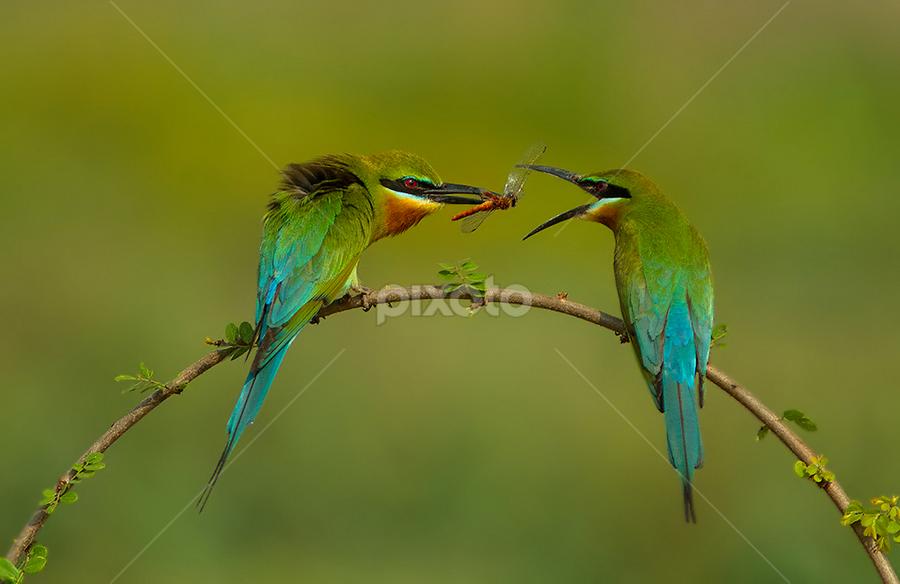 take it by Jineesh Mallishery - Animals Birds
