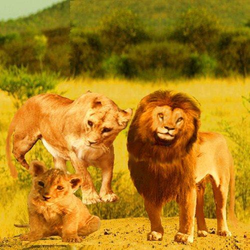 會說話的獅子