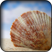 Seashells Wallpapers