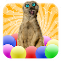 Meerkat Madness - Whack a Mole icon