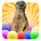 Meerkat Madness - Whack a Mole