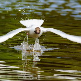 by Martin Tyson - Animals Birds (  )