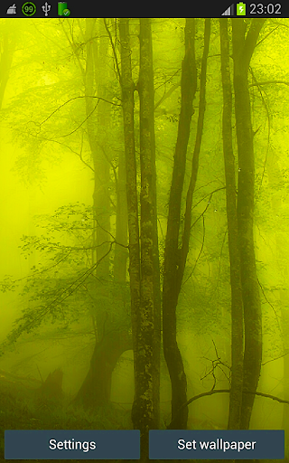 Forest Rain HD Wallpapers