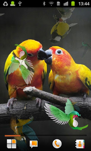 鳥 動態桌布
