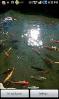 Screenshot of Pond of Fish