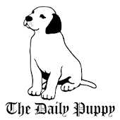 The Daily Puppy