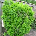 a shrubbery ;)