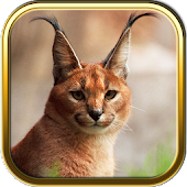 Free Wild Cats Puzzles