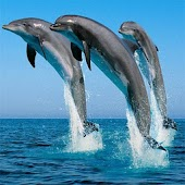 Animal World: Dolphins