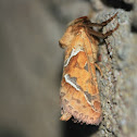 Orange Swift