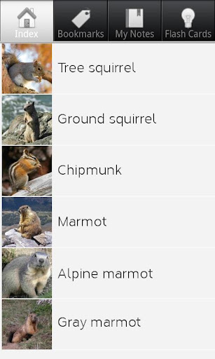 Squirrel Species