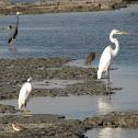 Heron & Egret
