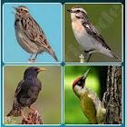 4 Songbird Quiz Games icon