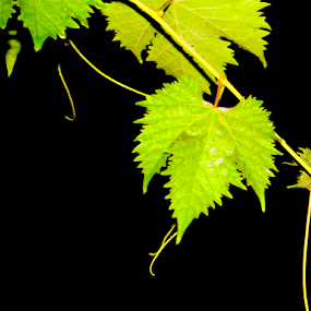 by Amal Vs - Nature Up Close Leaves & Grasses ( green, leaf, leaves,  )