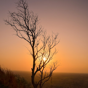 Sunset beauty !! by Prathap Gangireddy - Landscapes Sunsets & Sunrises ( sunsets, sunset, sundown, sunset tree, sun )