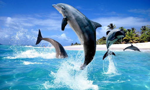 海洋海豚拼圖