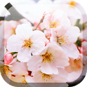 Cherry Flowers Live Wallpaper icon