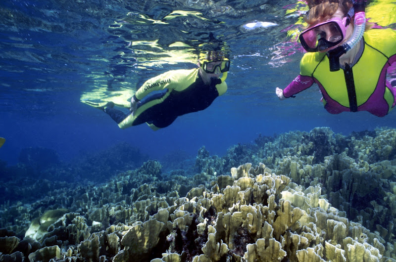 Snorkeling in the reefs near Bonaire in the Caribbean: Make sure you reserve your excursion spot ahead of time.