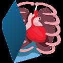 Human Body Anatomy 3D - Free icon