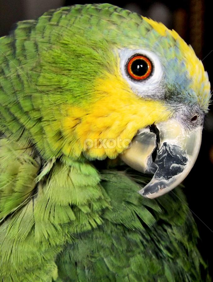 Rita by Ana Cárdenas O - Animals Birds ( animals, nature, green, parrot, close up, birds, eye,  )
