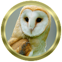 Owl Species: Types of Owl icon