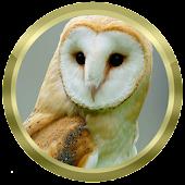 Owl Species: Types of Owl