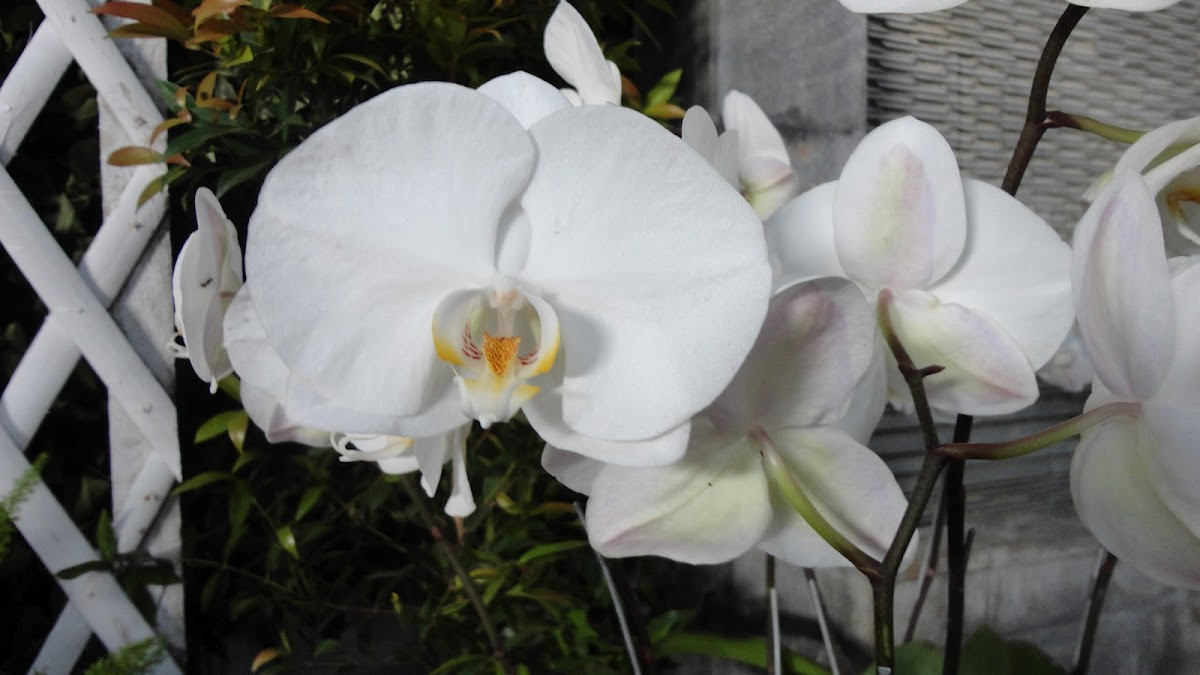 orchids month