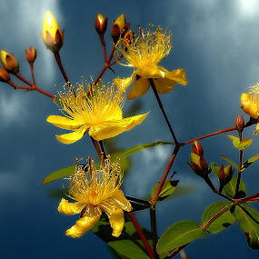 Reach for the Sky. by Dave  Horne - Flowers Tree Blossoms