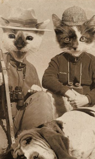 Cat Hunters Live Wallpaper