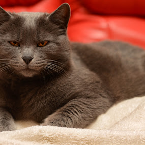 Mici by Metka Majcen - Animals - Cats Portraits (  )