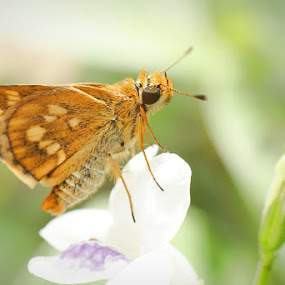 Just Butterfly by Chairul . - Animals Insects & Spiders