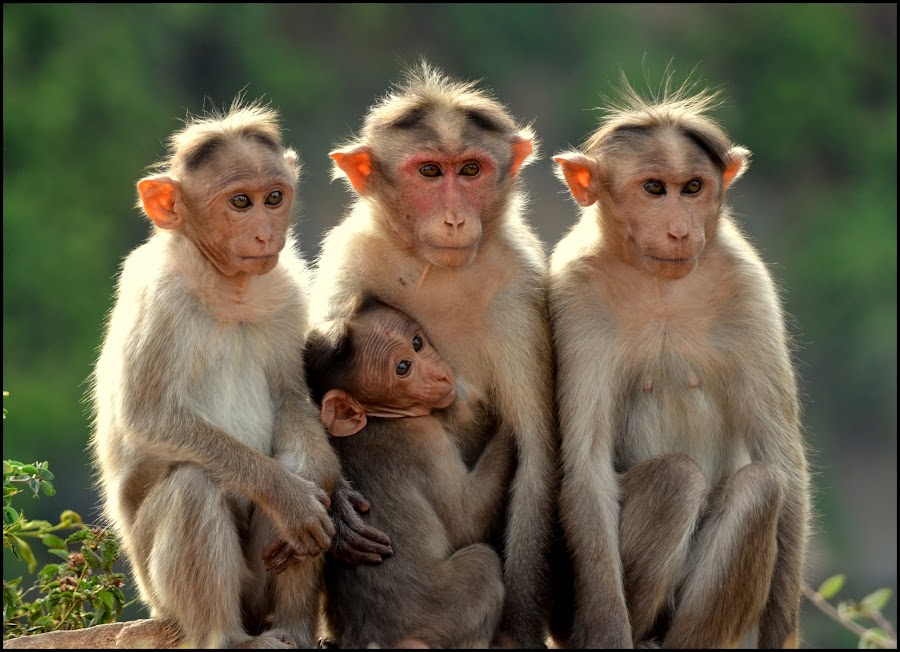 The Family...  by Vipin Pachat - Animals Other Mammals (  )
